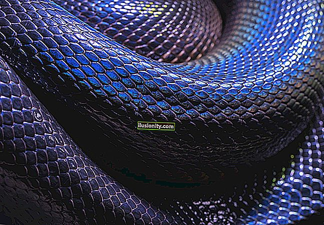 Python jika __nama__ == __main__ Dijelaskan dengan Contoh Kod