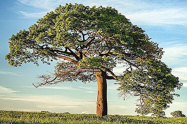 Penjelasan Pokok Penyisipan, Putaran, dan Keseimbangan AVL