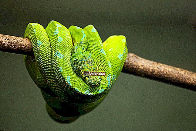 Najbolji vodiči za Python