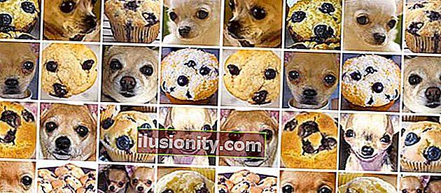 ¿Chihuahua o muffin? Mi búsqueda de la mejor API de visión artificial